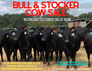 bull-stocker-cow-sale-1